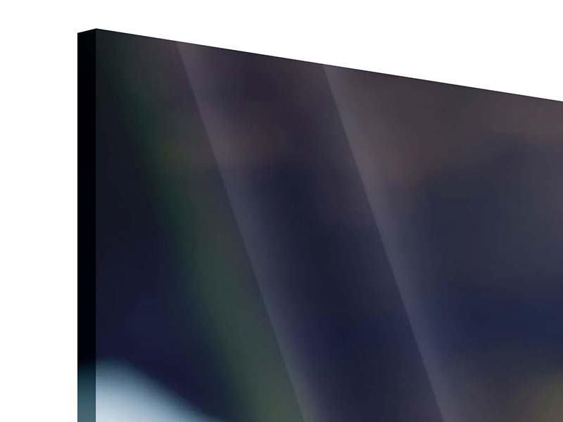Panorama Acrylglasbild 3-teilig Schlange