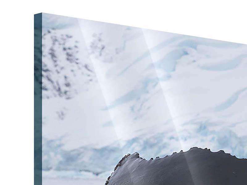 Panorama Acrylglasbild 3-teilig Der Buckelwal