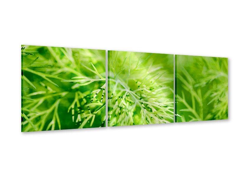 Panorama Acrylglasbild 3-teilig XXL Dill
