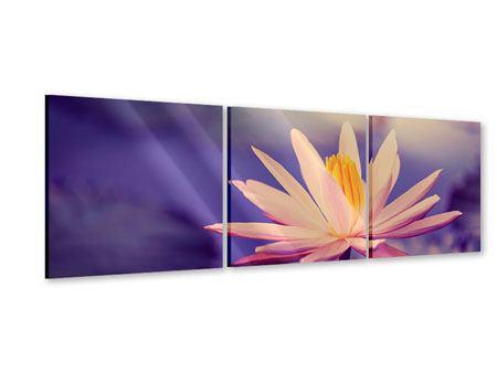Panorama Acrylglasbild 3-teilig Lotus bei Sonnenuntergang