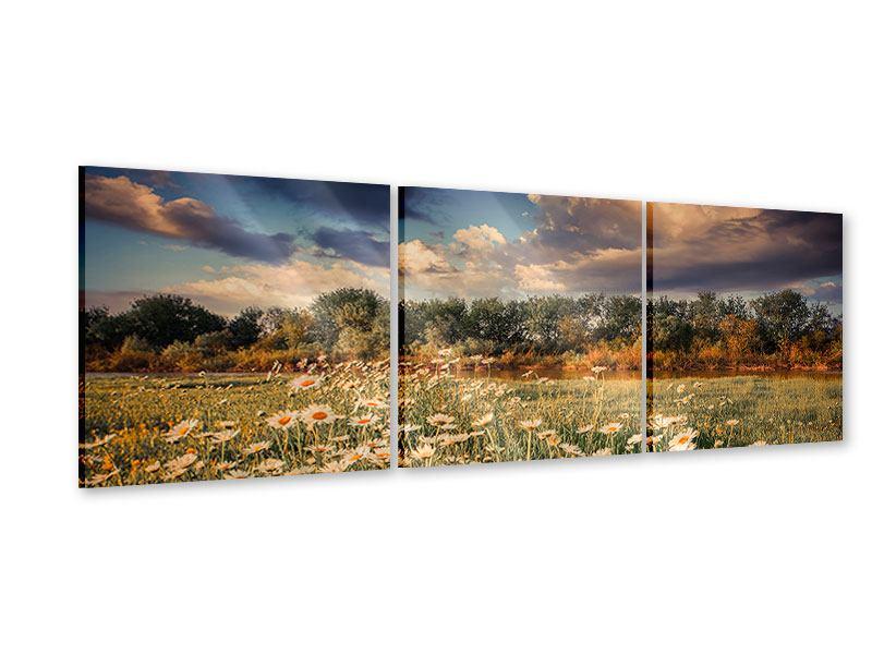 Panorama Acrylglasbild 3-teilig Die Wiesenmargerite am Fluss