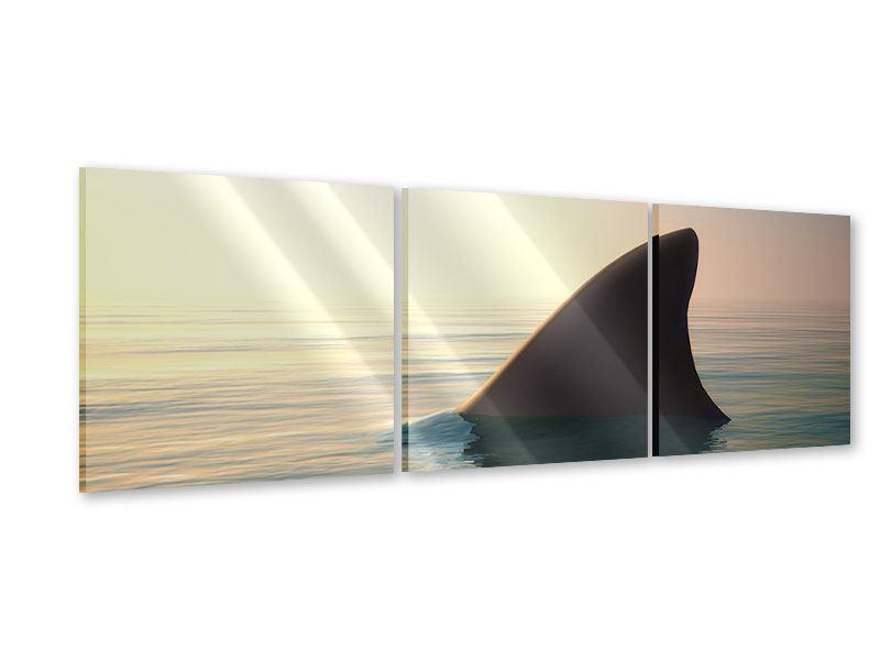 Panorama Acrylglasbild 3-teilig Haifischflosse