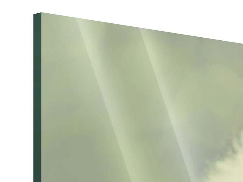 Panorama Acrylglasbild 3-teilig Die Pusteblume
