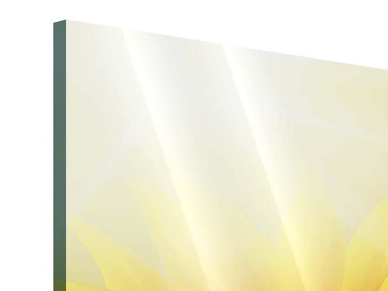 Panorama Acrylglasbild 3-teilig Sonnenblume im Morgentau