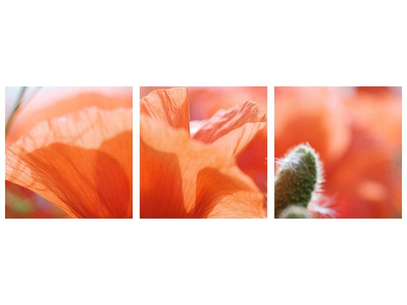 Panorama Acrylglasbild 3-teilig Klatschmohn XXL
