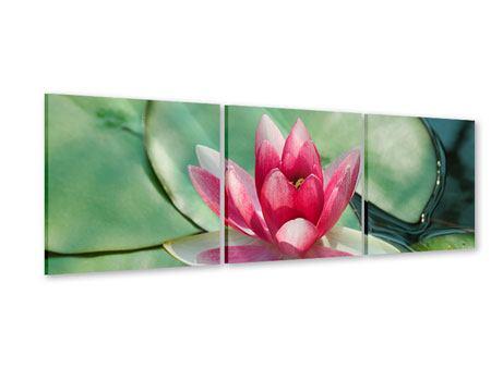 Panorama Acrylglasbild 3-teilig Der Frosch und das Lotusblatt
