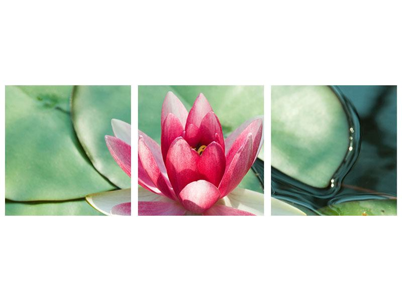 Panoramic 3 Piece Acrylic Print The Frog And The Lotus Leaf