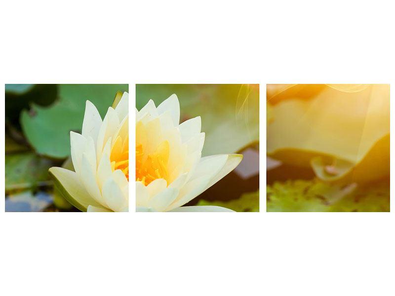 Panorama Acrylglasbild 3-teilig Romantische Seerose