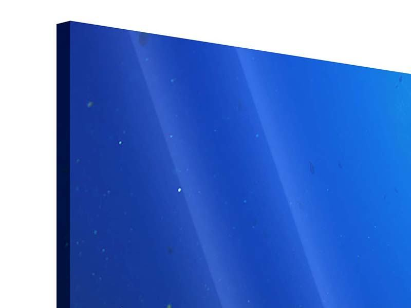 Panorama Acrylglasbild 3-teilig Fischschwarm