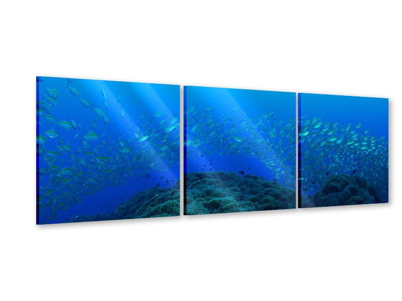 Panorama Acrylglasbild 3-teilig Fischschwärme