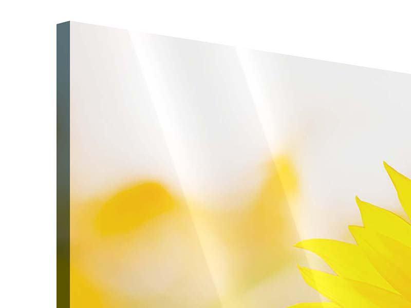 Panorama Acrylglasbild 3-teilig Sunflower