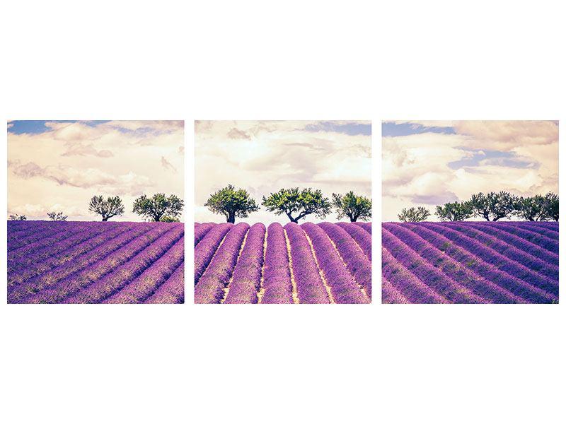Panorama Acrylglasbild 3-teilig Das Lavendelfeld