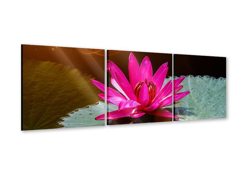 Panorama Acrylglasbild 3-teilig Der Frosch und das Seerosenblatt