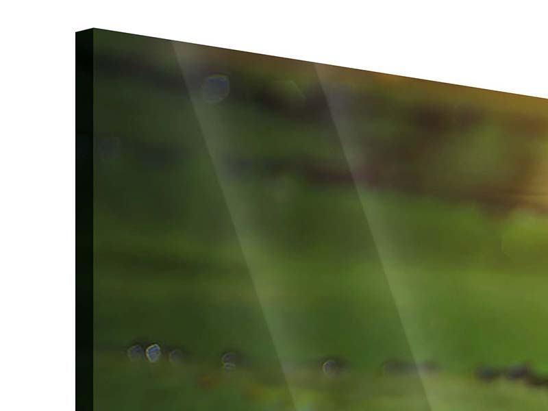 Panorama Acrylglasbild 3-teilig Lilienspiegelung