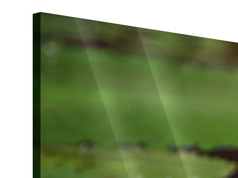 Panorama Acrylglasbild 3-teilig Lotus im Wasser
