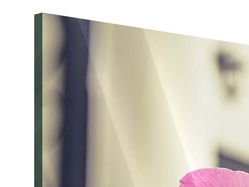 Panorama Acrylglasbild 3-teilig Ein Fensterplatz für die Orchideen