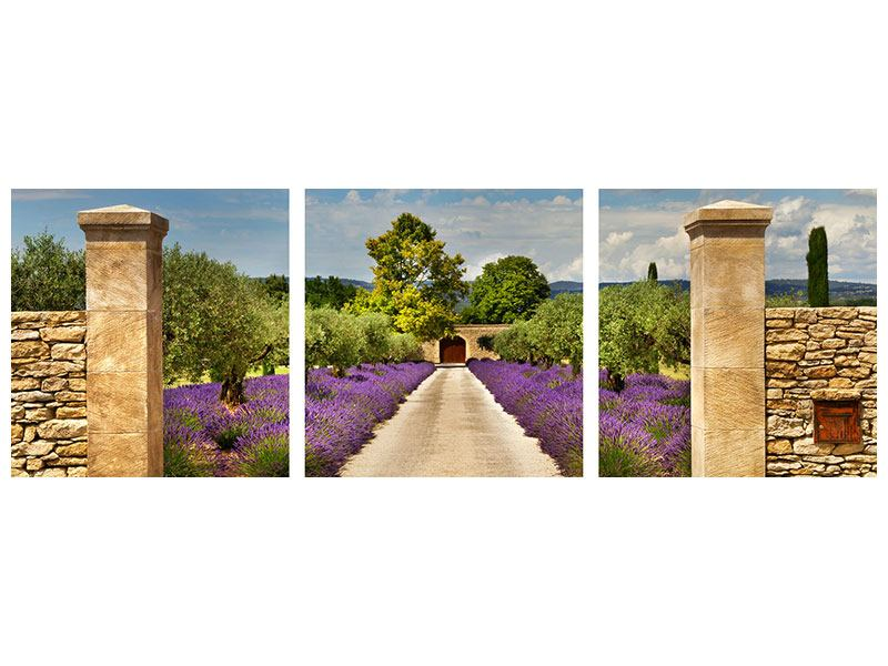 Panorama Acrylglasbild 3-teilig Lavendel-Garten
