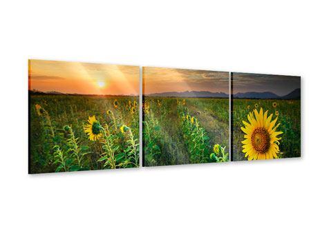 Panorama Acrylglasbild 3-teilig Sonnenblumenfeld im Abendrot
