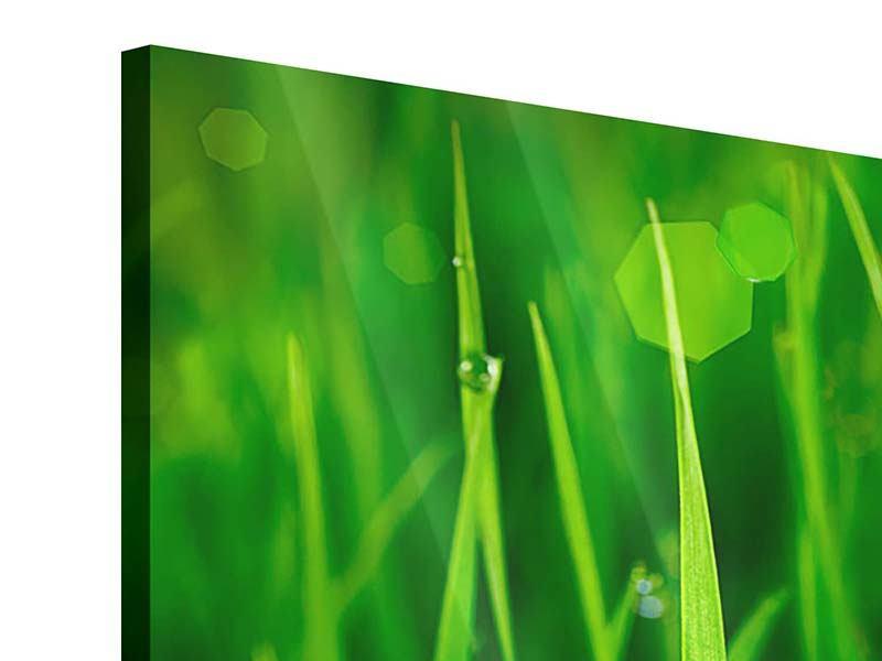 Panorama Acrylglasbild 3-teilig Gras mit Morgentau