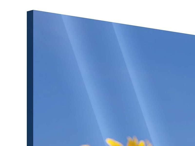 Panorama Acrylglasbild 3-teilig Himmlische Sonnenblumen