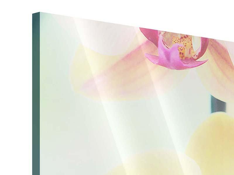 Panorama Acrylglasbild 3-teilig Lovely Orchidee