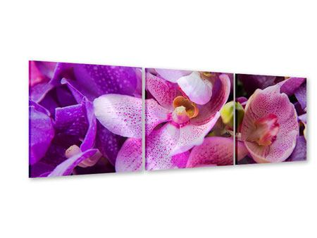 Panorama Acrylglasbild 3-teilig Im Orchideenparadies
