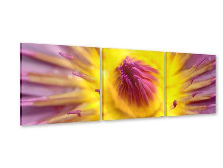 Panorama Acrylglasbild 3-teilig XXL-Lotus