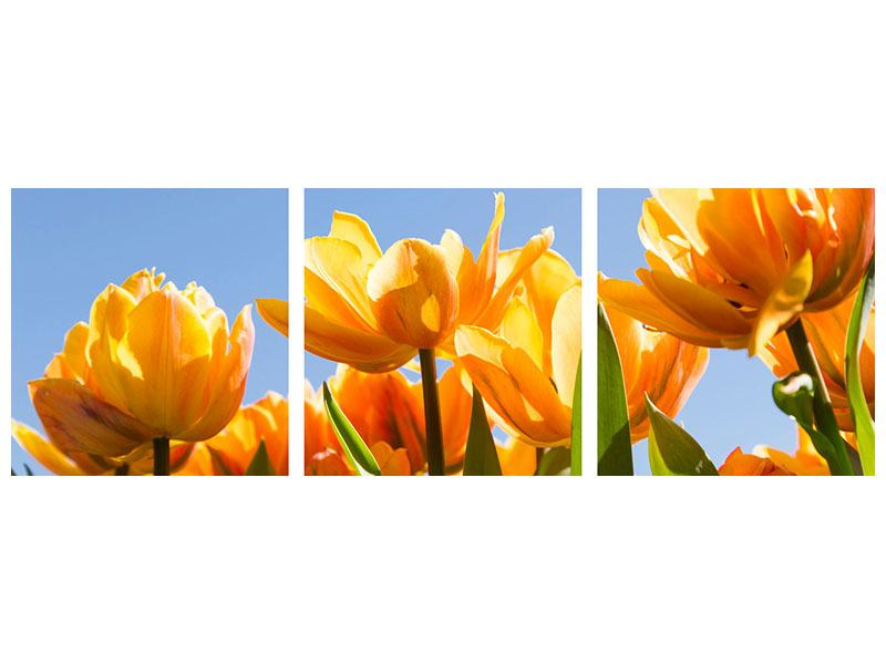 Panorama Acrylglasbild 3-teilig Märchenhafte Tulpen