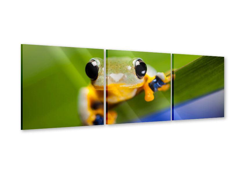 Panorama Acrylglasbild 3-teilig Frosch XXL