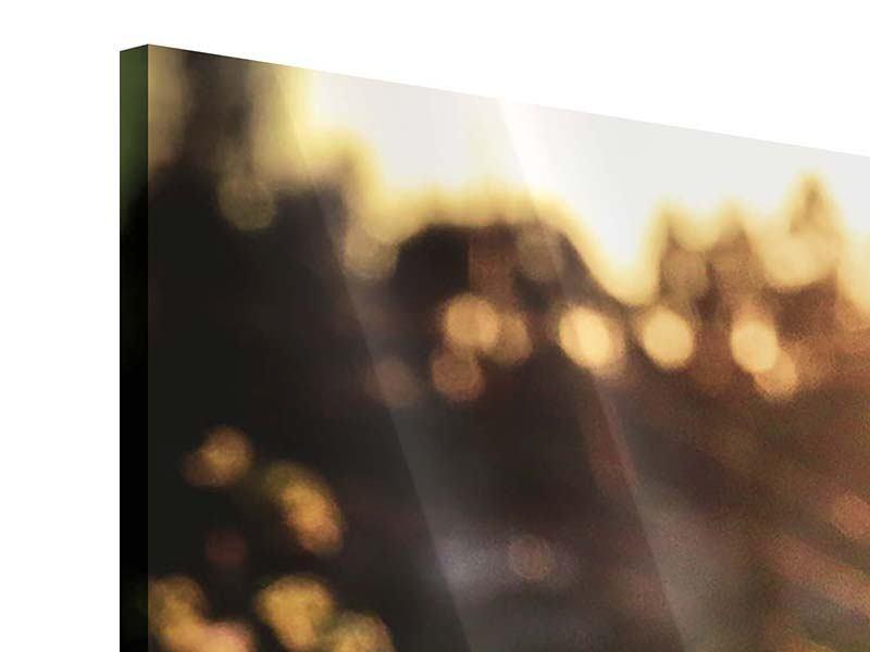 Panorama Acrylglasbild 3-teilig Gänseblümchen bei Sonnenuntergang