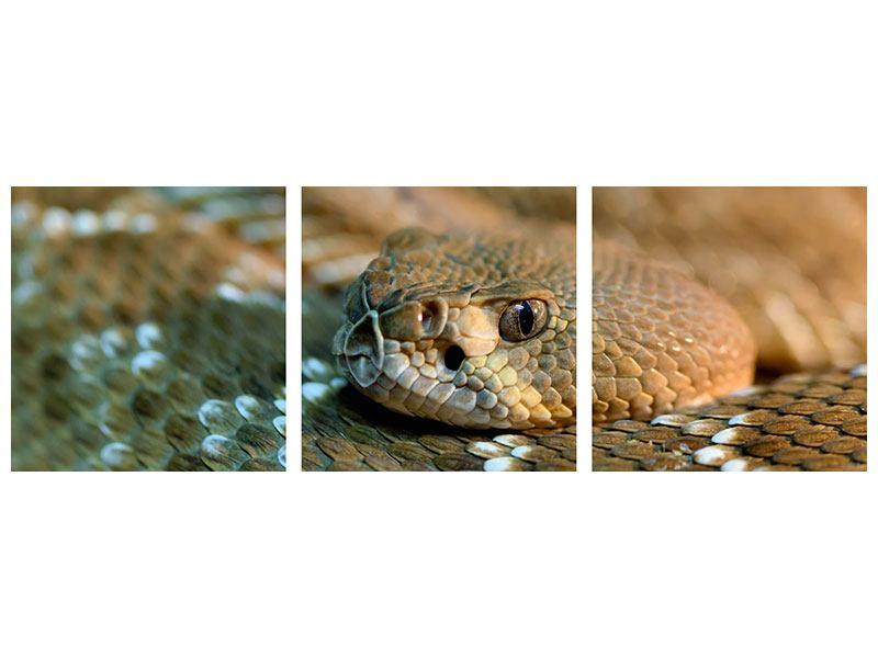 Panorama Acrylglasbild 3-teilig Viper