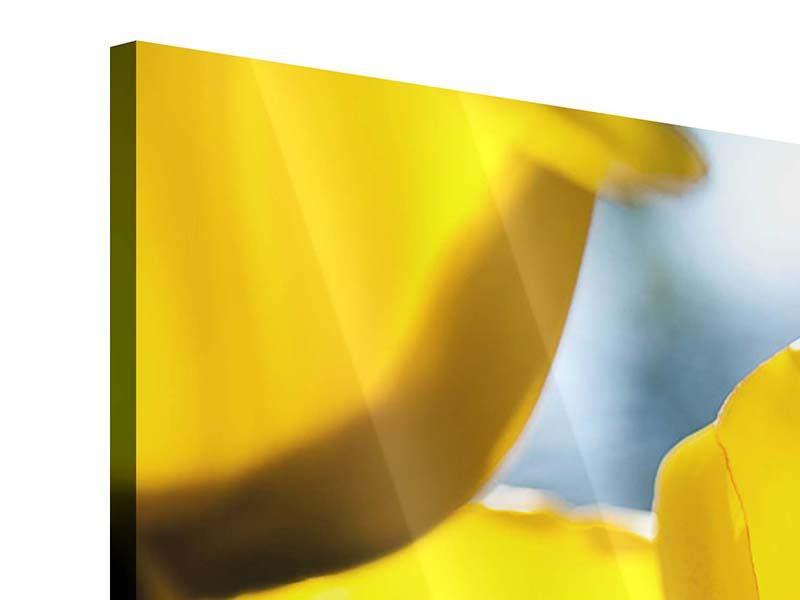 Panorama Acrylglasbild 3-teilig Gelbe Tulpen in XXL