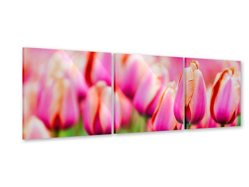 Panorama Acrylglasbild 3-teilig Pretty in Pink