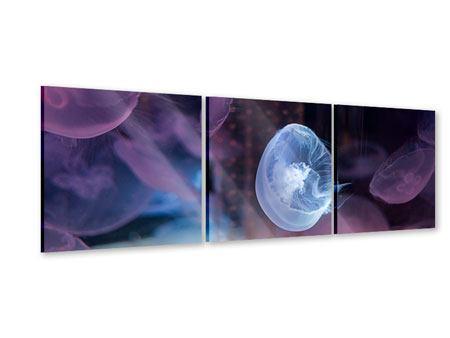 Panorama Acrylglasbild 3-teilig Die Schönheit der Quallen