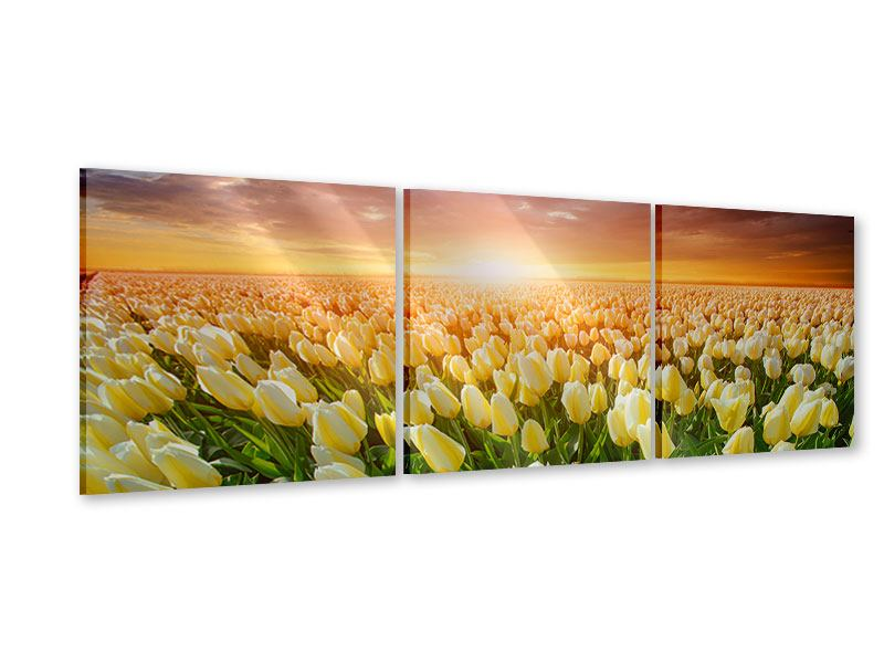 Panorama Acrylglasbild 3-teilig Sonnenaufgang bei den Tulpen