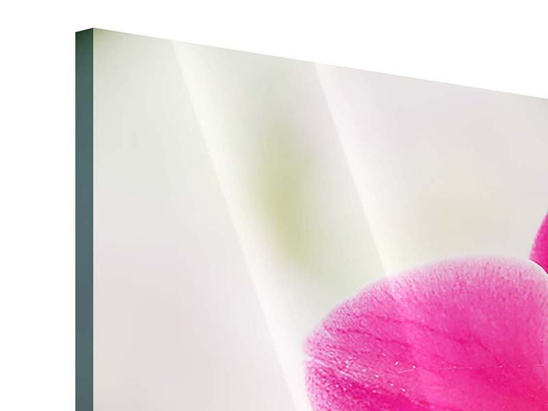 Panorama Acrylglasbild 3-teilig Perspektivische Orchideen