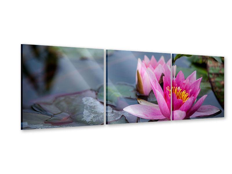 Panorama Acrylglasbild 3-teilig Das Seerosenduo