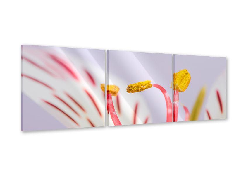 Panorama Acrylglasbild 3-teilig Close Up Die exotische Schönheit