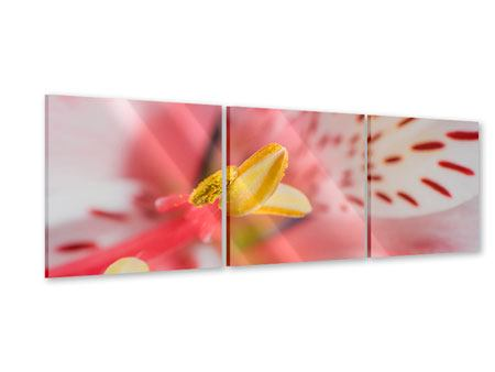 Panorama Acrylglasbild 3-teilig Der Lilienstempel