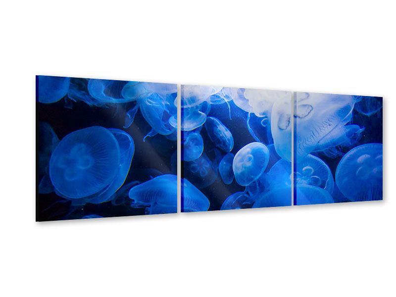 Panorama Acrylglasbild 3-teilig Quallen