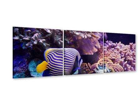 Panorama Acrylglasbild 3-teilig Faszination Unterwasser