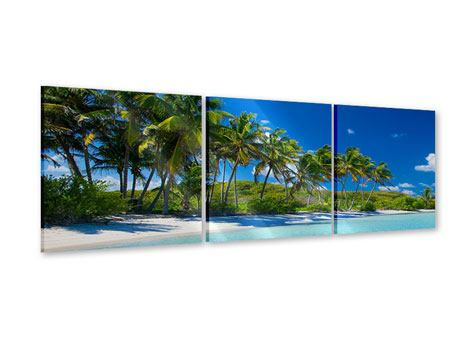 Panorama Acrylglasbild 3-teilig Standpalmen