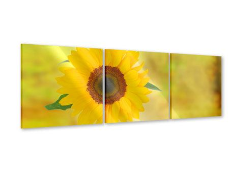 Panorama Acrylglasbild 3-teilig Die Sonnenblume