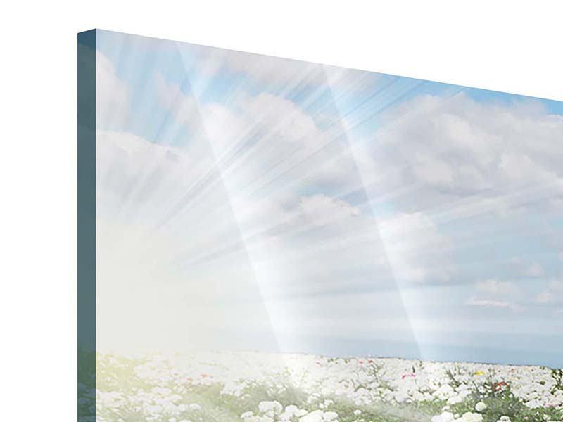 Panorama Acrylglasbild 3-teilig Die Frühlingsblumenwiese