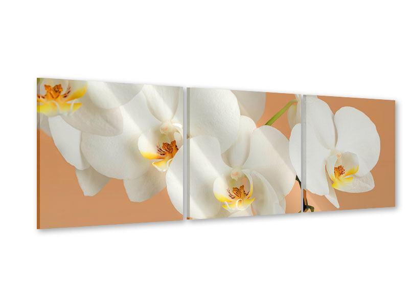 Panorama Acrylglasbild 3-teilig Weisse Orchideenblüten