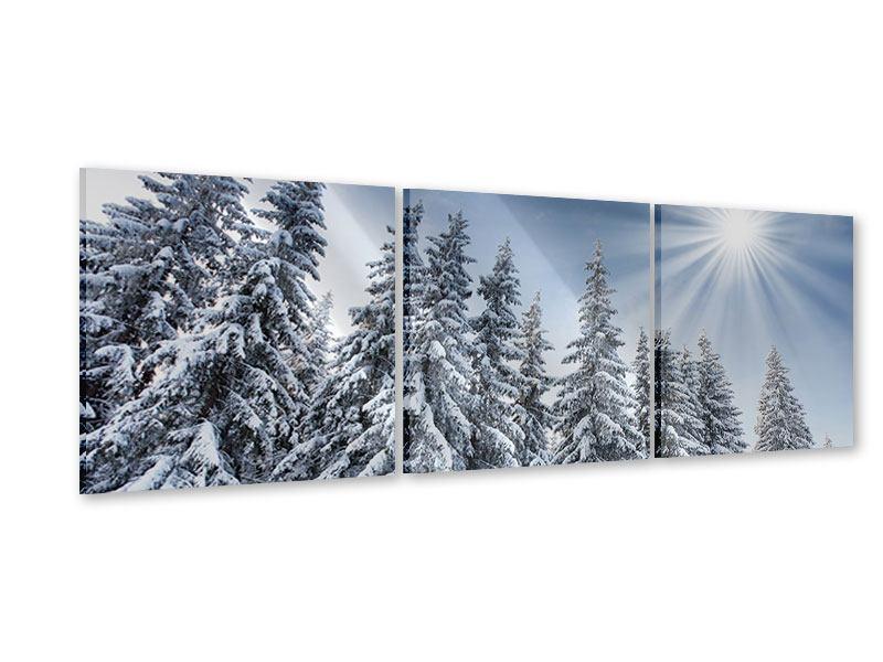 Panorama Acrylglasbild 3-teilig Wintertannen