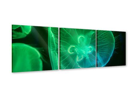 Panorama Acrylglasbild 3-teilig Quallen im Licht