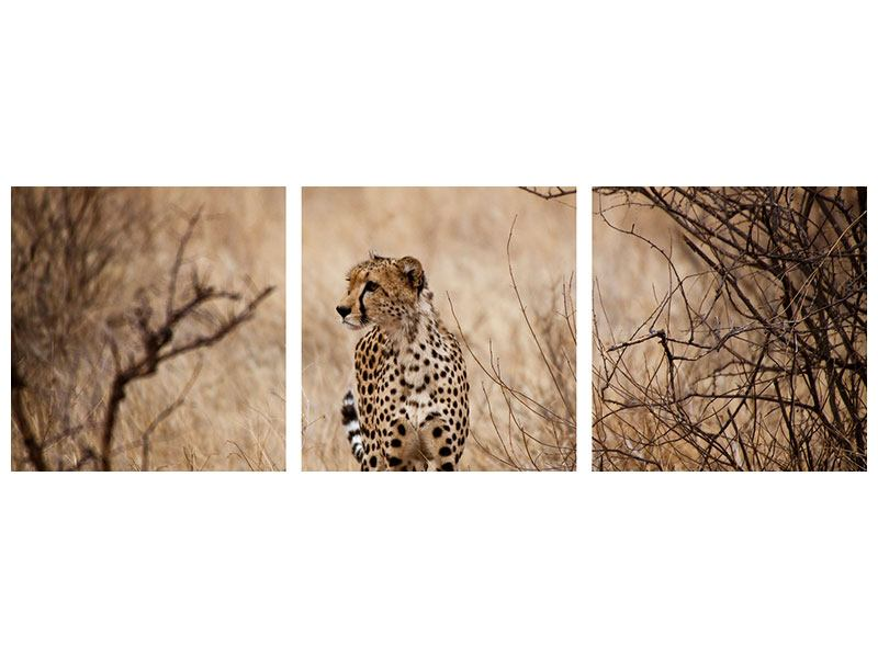 Panorama Acrylglasbild 3-teilig Eleganter Gepard