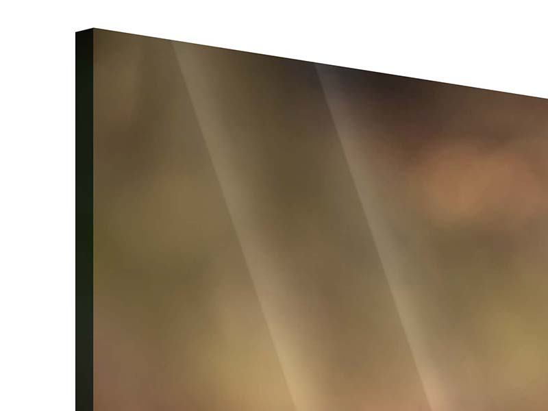 Panorama Acrylglasbild 3-teilig Der Jagdhund