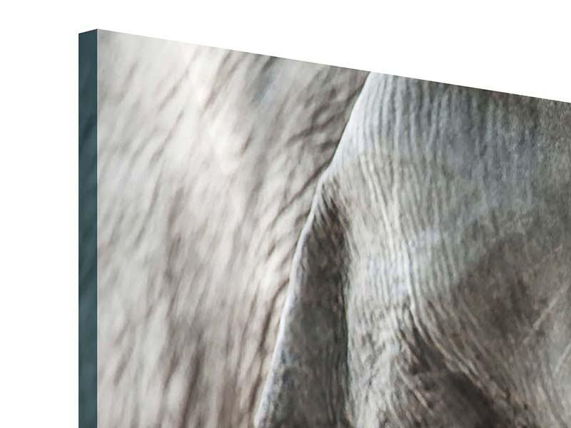 Panorama Acrylglasbild 3-teilig Close Up Elefant